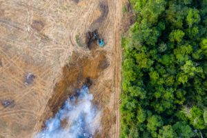 Aerial Photograph of Deforestation