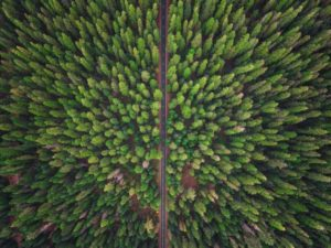 Aerial Photograph of Green Forest