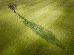 Tree Shadow in Field