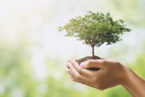 Hand Holding Tree Growing