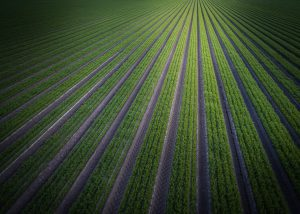 Large Green Field