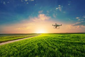 Drone Flying Above Corn Field